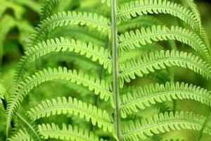 conseil-plantes
